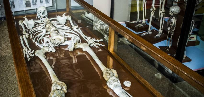 Le « Géant Constentin », un squelette de 2,58 mètres !
