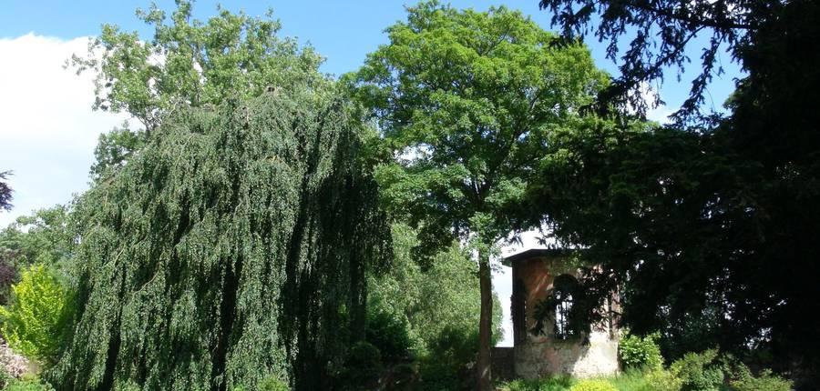 Hetre pleureur et pavillon- Colfontaine
