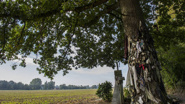 The nail tree of Herchies, from beliefs to mystery (Jurbise)